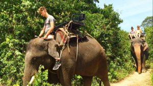 customers elephnat trekking