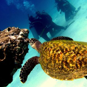 Excursion Snorkeling VIP Koh Tao