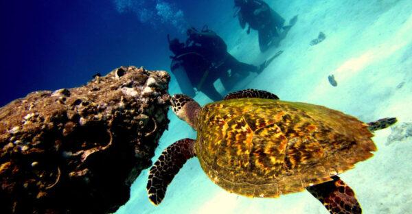 Excursion Snorkeling VIP Koh Tao