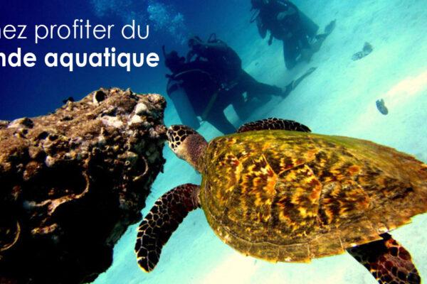 Venez profiter du monde aquatique