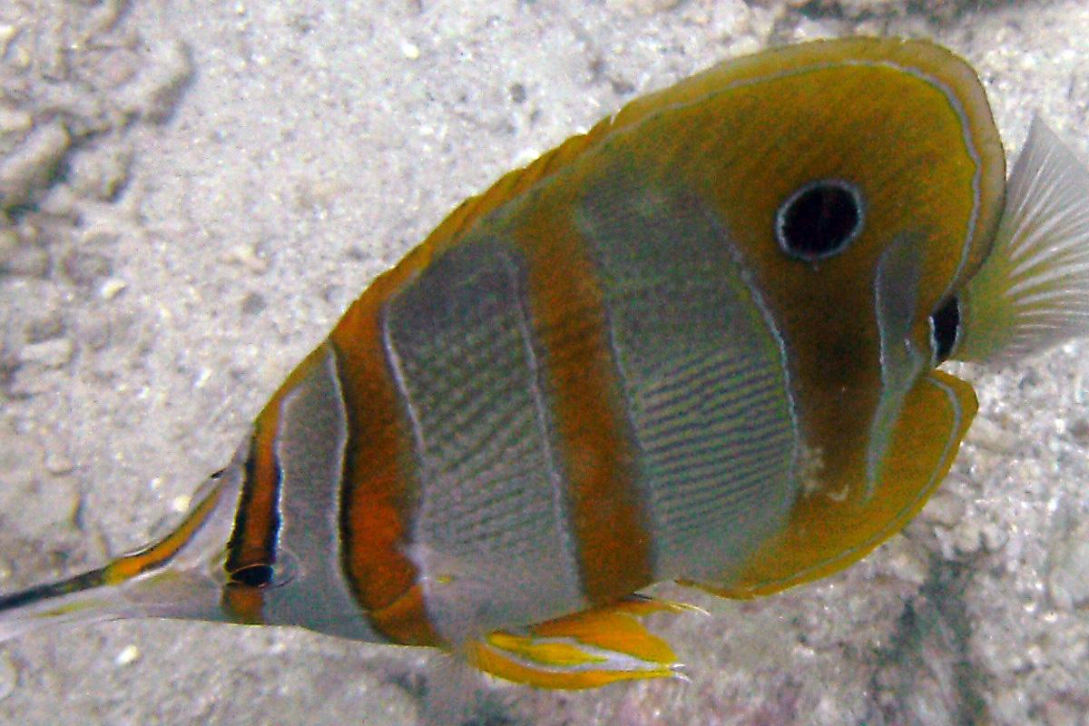 Snorkeling & Fish