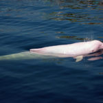Amazing Khanom and Pink Dolphin Spotting Tour