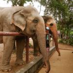 Samui Elephant Sanctuary