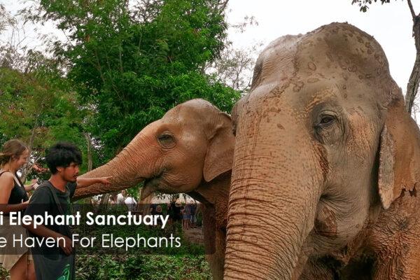 Samui Elephant Sanctuary - A Safe Haven For Elephants